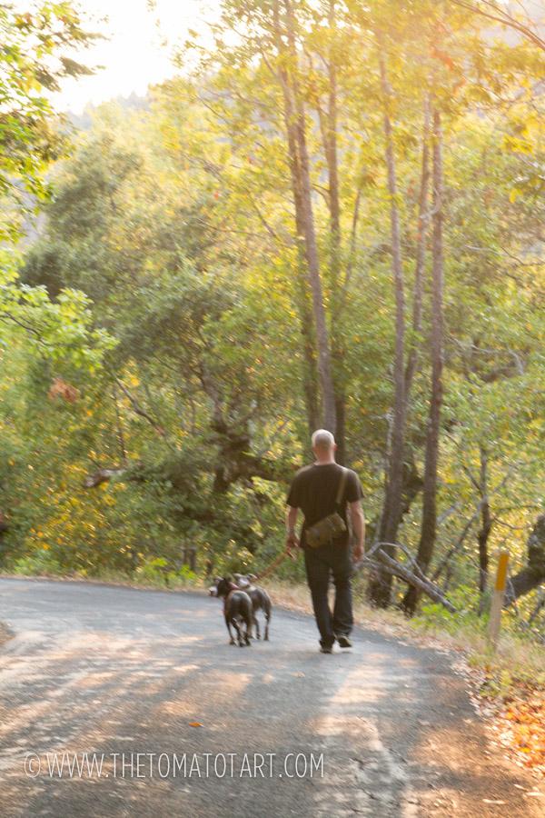 Sonoma County Redwoods