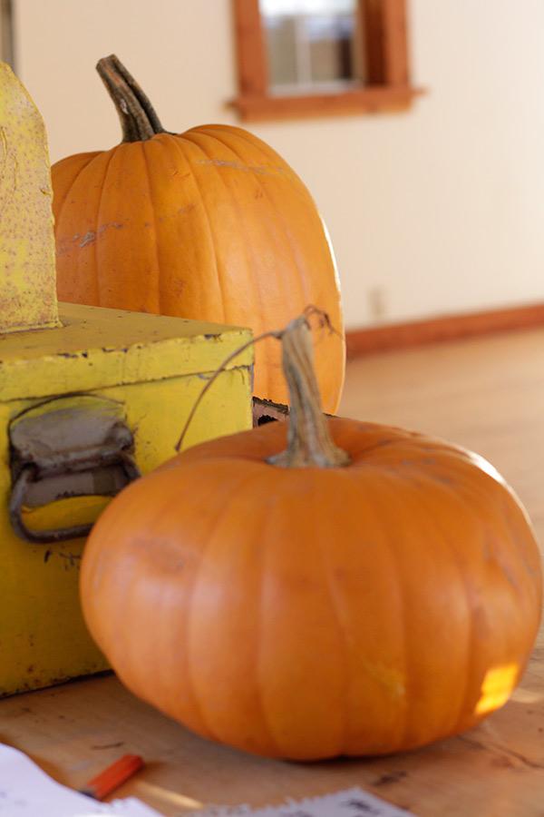 Bolinas Pumpkins
